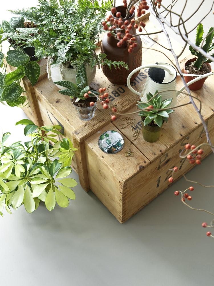 dta decoratualma homedeco plants