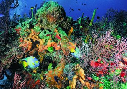 estrella de mar,coral, gran canaria,