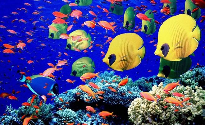 corales,peces,mar,australia