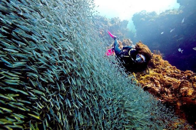 peces,bucear,fondo,marino
