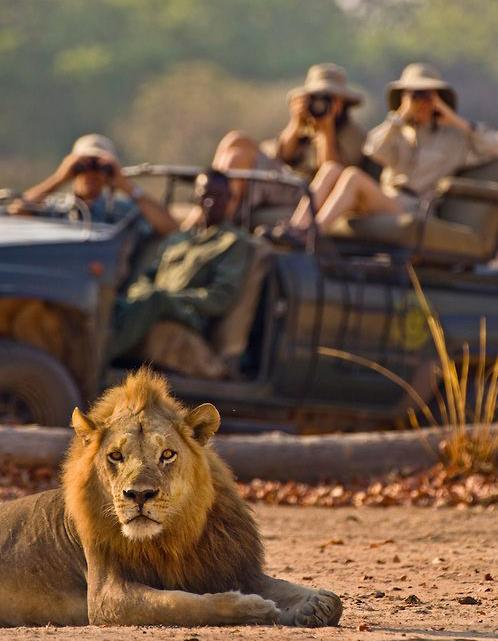 safari,león,fotos,familia,excursión