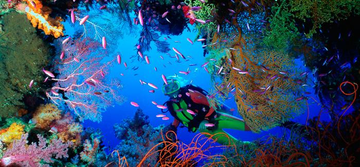 corales,peces,mar,australia,persona,bucear
