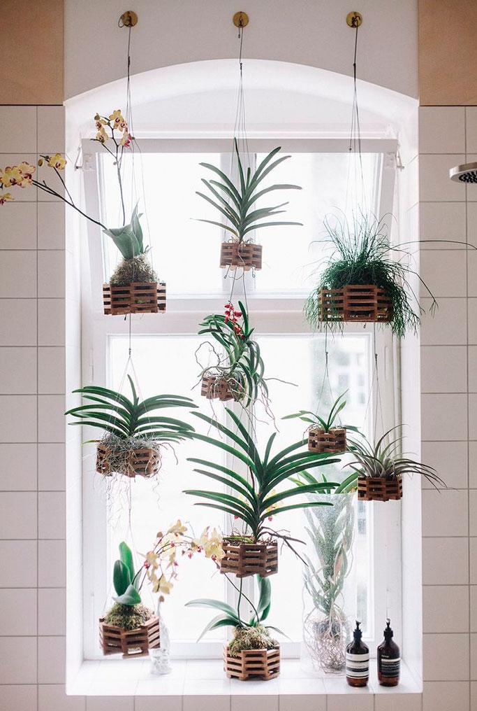 plantas-colgantes-en-la-ventana-elisa-beltran-para-decoratualma