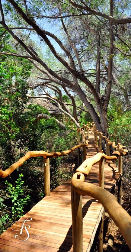 pasarela,madera,árboles,verde