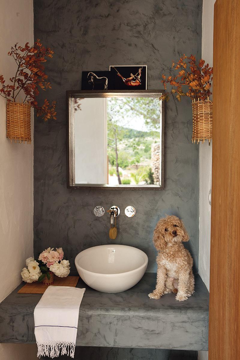 baño,perro