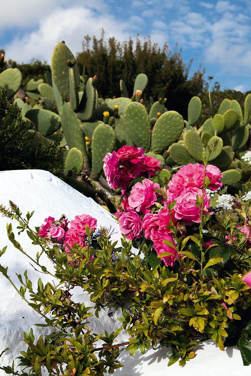 cactus,rosas