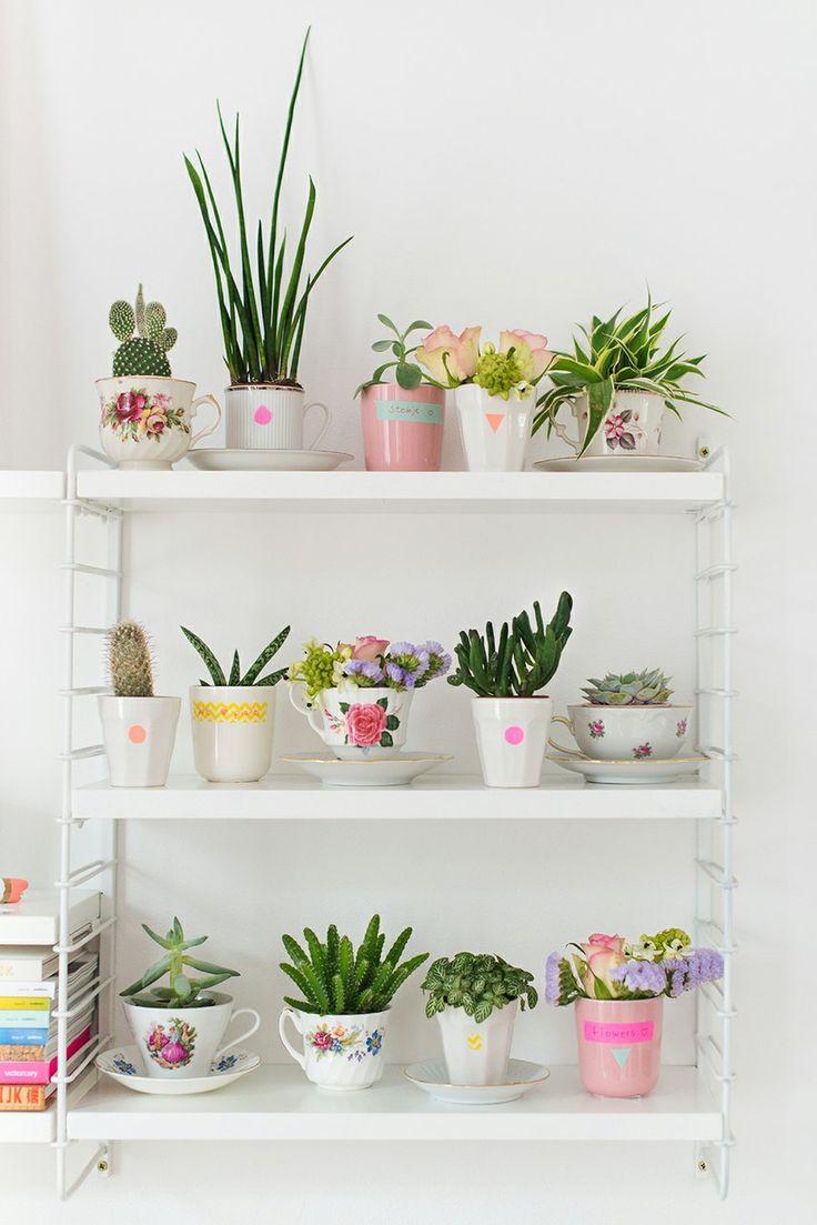 Suculentas y estanteria string pocket blanca decoratualma dta plantas interior jardin 5