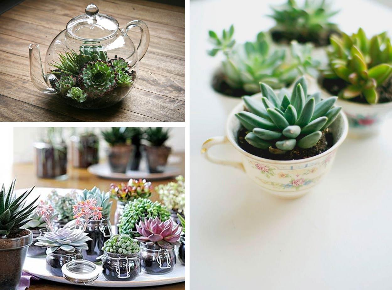 compo-suculentas-menaje-mini-jardin-espacios-pequeños-interiores-decoratualma-dta