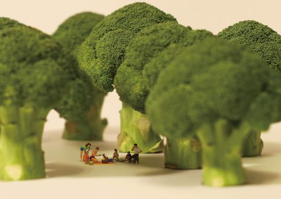 bosque en miniatura decoratualma dta arte